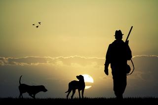 perros cazadores