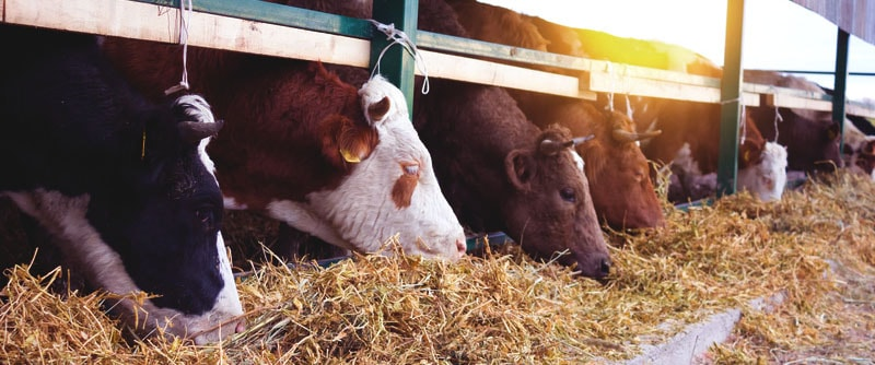 curso inseminacion artificial bovinos