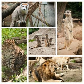 curso cuidador de animales de zoologico