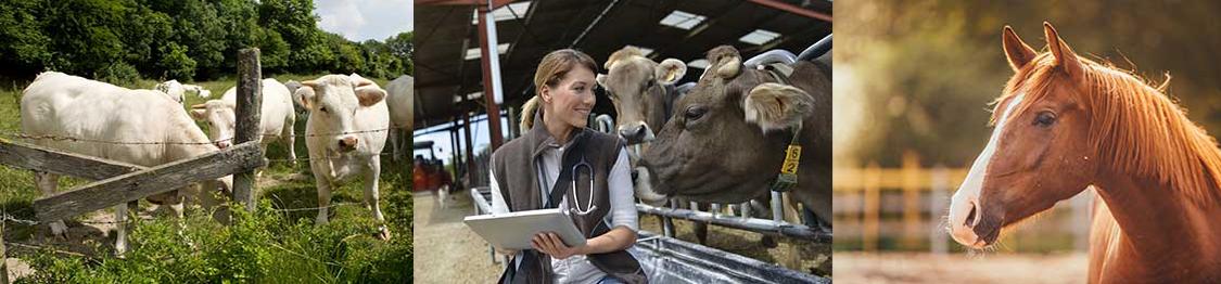 curso auxiliar veterinaria granjas