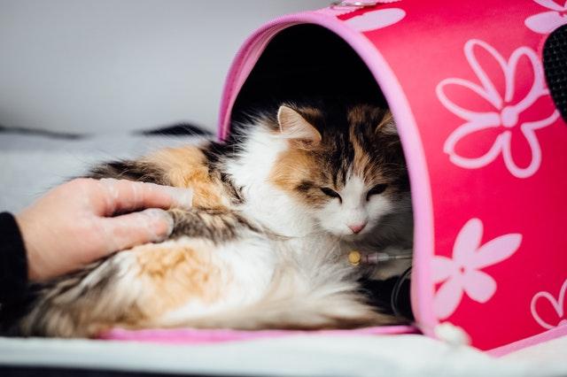 cómo abrir una farmacia veterinaria