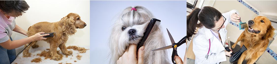 Cursos de peluqueria canina en ourense