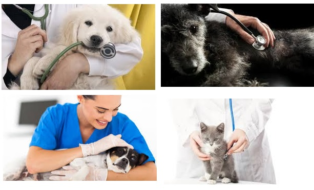 auxiliar de veterinaria a distancia y veterinario on line gratis