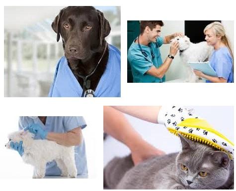 Curso auxiliar tecnico veterinario online atv ayudante